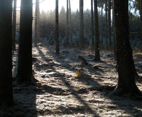 Asta-im-Wald