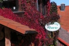rot rankt der wilde Wein an unserer Fassade