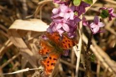 Schmetterling-auf-Blütenzweig